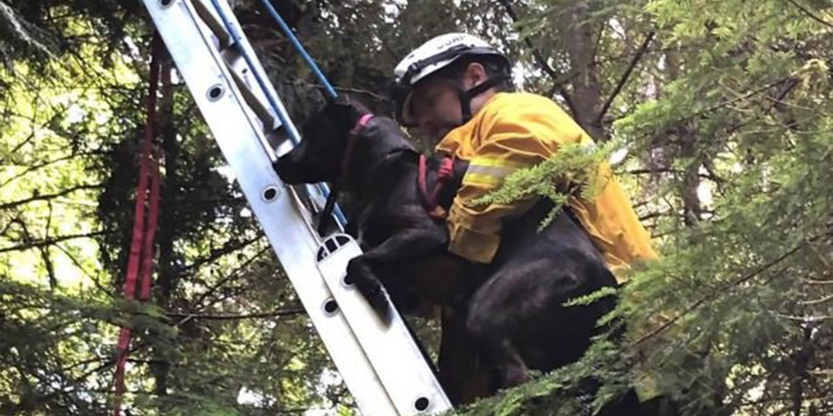 Firefighters rescue dog found stuck in tree in heartwarming photos