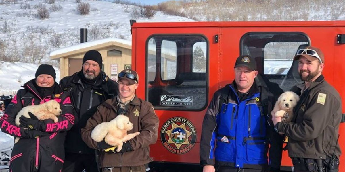 Three abandoned puppies rescued from Utah mountaintop