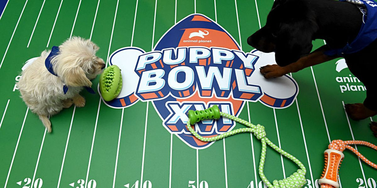 Image result for Puppy Bowl 2020