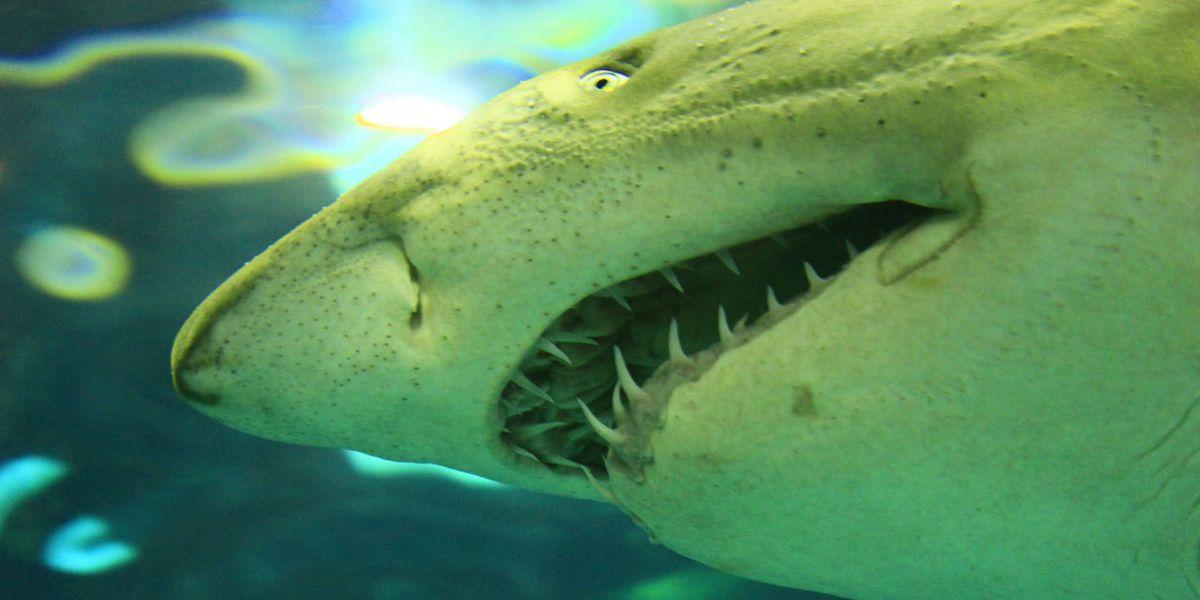 16-year-old girl on boogie board bitten by shark off Florida beach