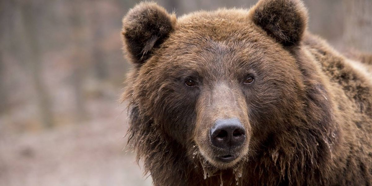Hungry bear finds trove of beef jerky at shelter in Great Smoky Mountains National Park