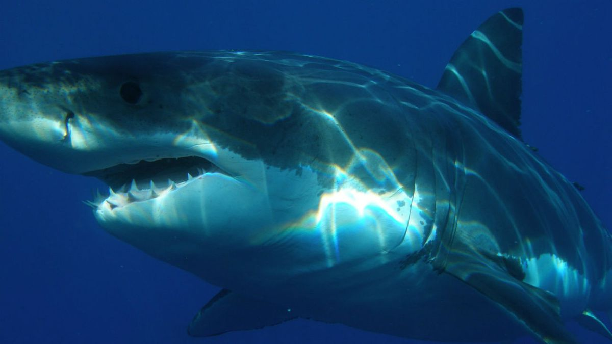 Man ticketed for branding several sharks