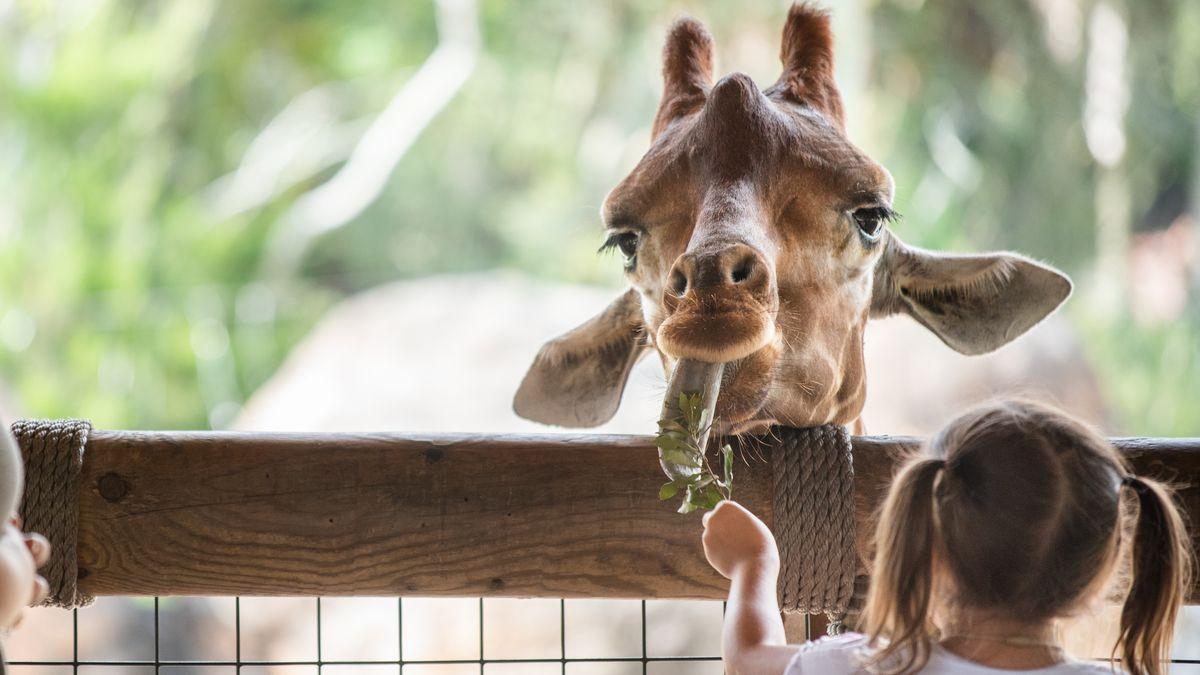 Jacksonville Zoo looking to raise $250,000