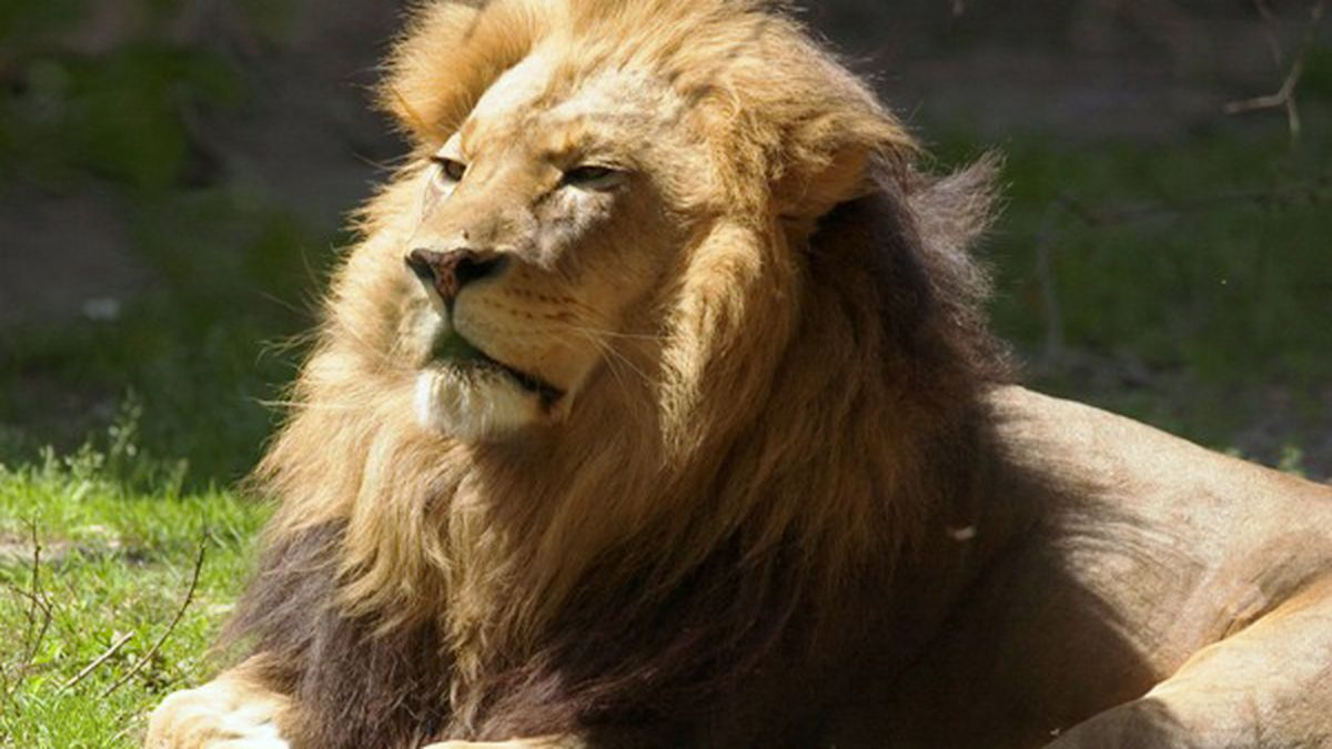 Jacksonville Zoo worker shocked by fence while trying to escape from lion