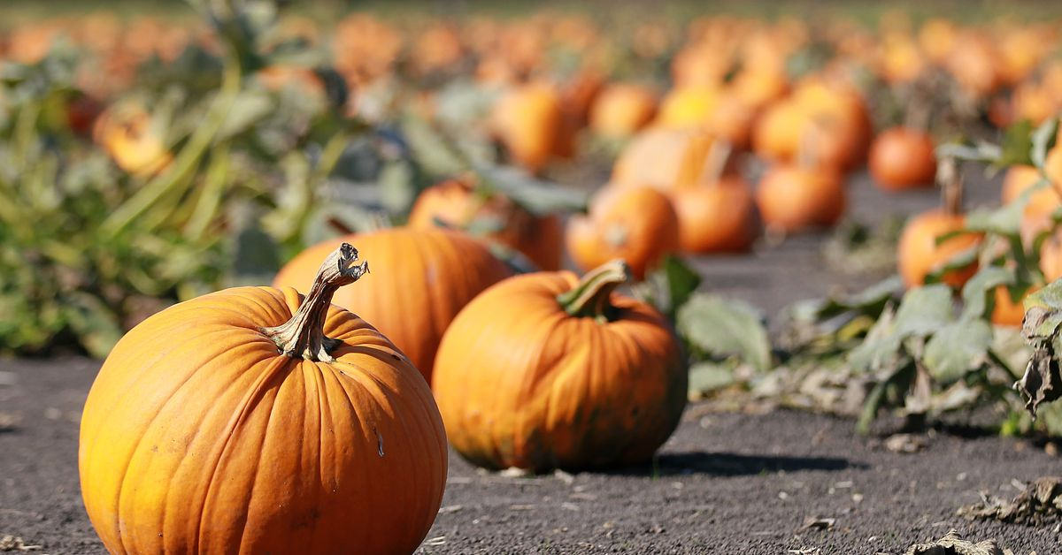 FALL FUN 2020: Northeast Florida fall festivities for the whole family