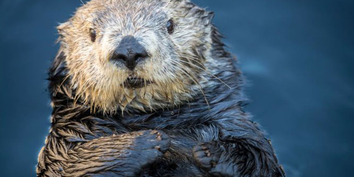 Health officials issue Rabies alert in Nassau County after otter tested positive for virus