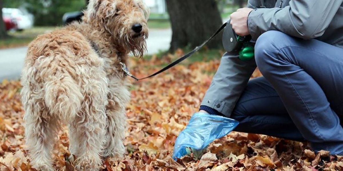 Professionals in Jacksonville will come to your home to pick up your dog's poop