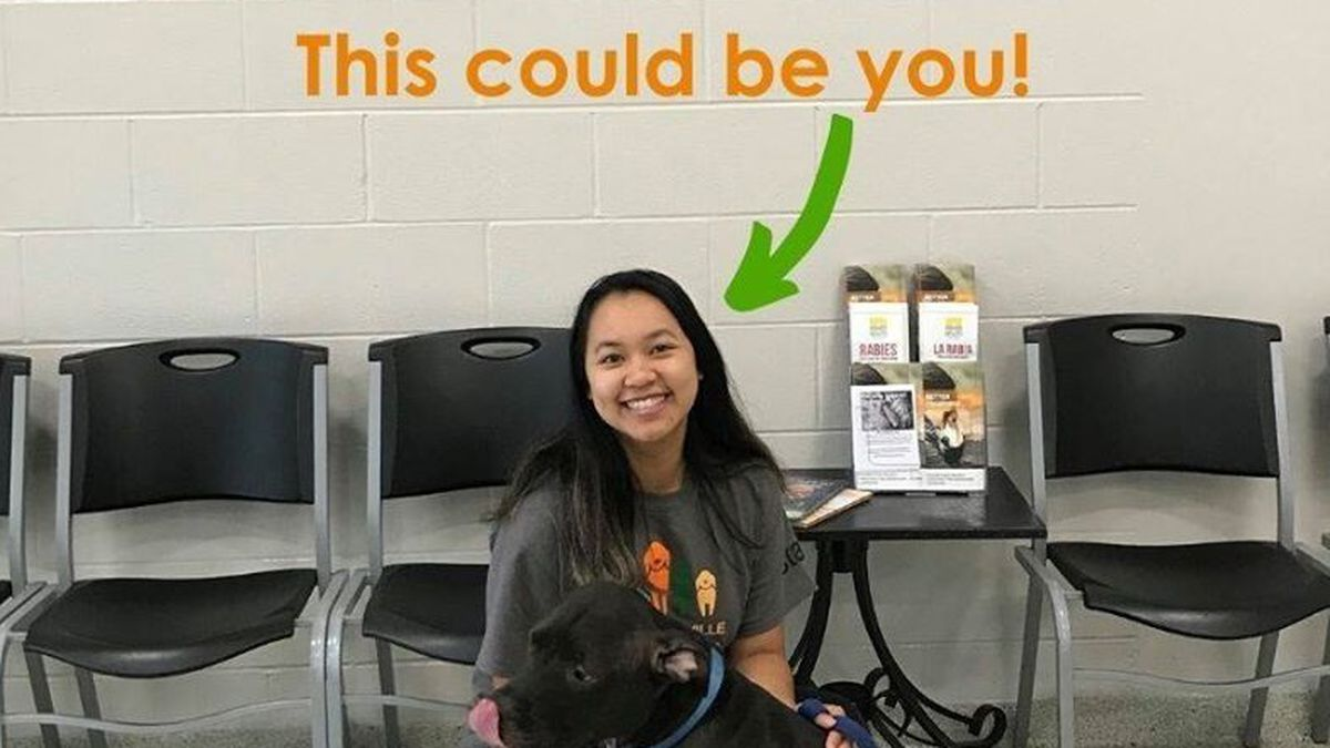 Coronavirus: Jacksonville Humane Society offers jobs to those who have recently lost employment
