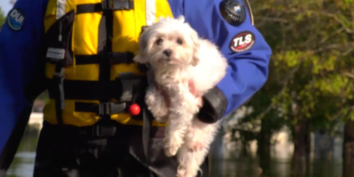 Local animal shelters preparing for Hurricane Dorian